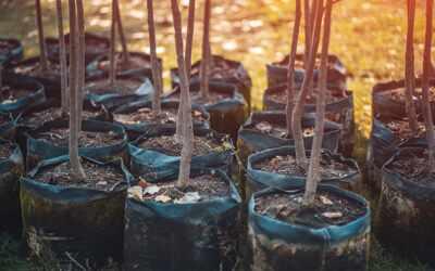 Votre imprimerie agit pour la forêt avec REFOREST'ACTION
